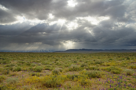 dramatic sky with sunrays over a desert field with wildflowers
