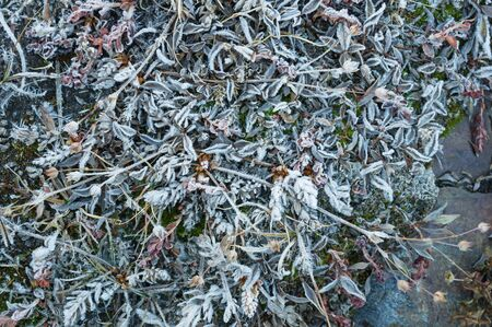 frozen alpine meadow with ice and frost on the leaves and grass Banco de Imagens