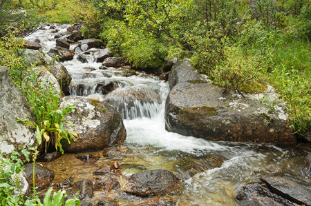 a small fast flowing creek in the Collegiate Peaks Wilderness in Colorado Banco de Imagens - 93012950