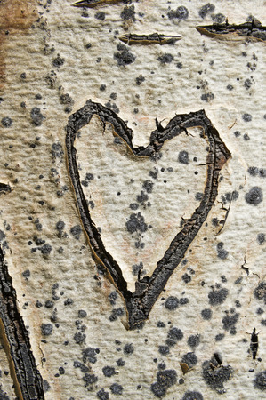 old heart carved into an aspen tree trunk Banco de Imagens - 93761446