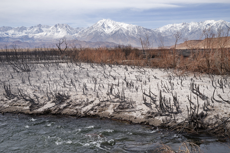 remains after the Pleasant Fire in the Owens Valley burned along the Owens River Banco de Imagens - 97019518
