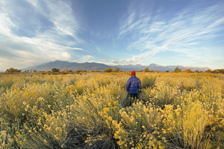 a man standing in a field of rabbitbrush looking at the Sierra Nevada Mountains near Bishop California