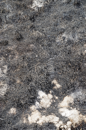 ground that has been burned by the Pleasant Fire wildfire with charred grasses Stock Photo