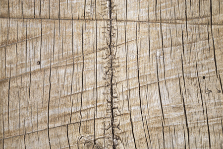 rough sawed wood log background with splits and cracks
