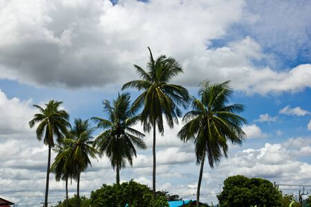 Coconut Trees and Country thailand