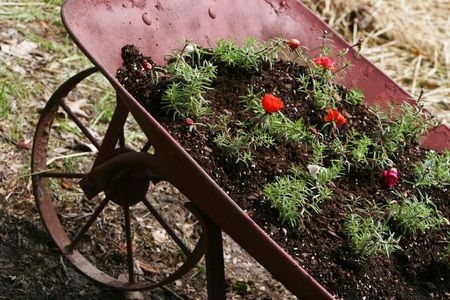 Wheelbarrow with flowers in potting soil and straw in the background. Photographed at a tilt angle 版權商用圖片