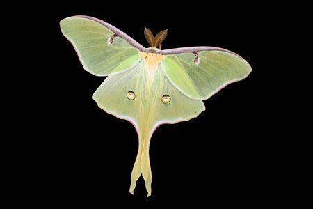 Large moth on black backround