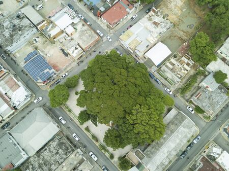 zenith drone shot above a big tree ( Samanea Saman ) canopy in middle of town houses in urban landscape of the tropical town of Jarabacoa in Dominican Republic Stok Fotoğraf
