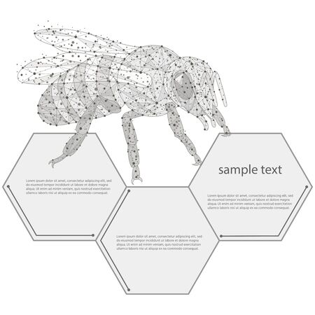 bee abstract  design. low poly frame isolated black on white background.The concept of insects consists of lines, dots, triangles.