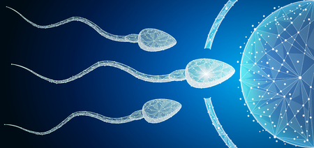Human Egg Cell Fertilization with Sperm Cells Inside of Uterus