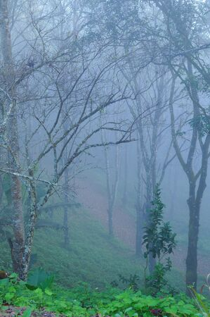 Green forest with fog between trees Stock Photo - 9194159