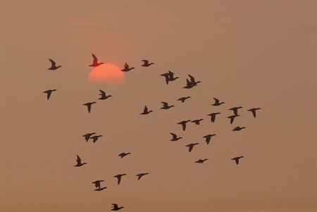 Birds fly at sunrise photo