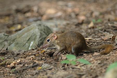 lows: Lows Squirrel
