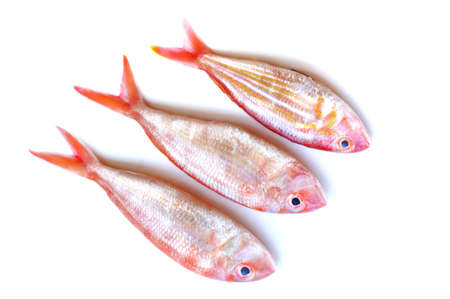 Fresh fish isolated on white background photo