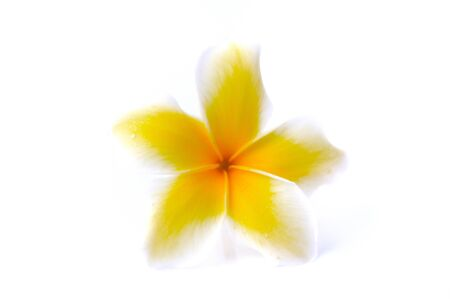 Frangipani flower isolated on white background Stock Photo - 14096523