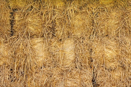 Bale golden straw,Thailand photo