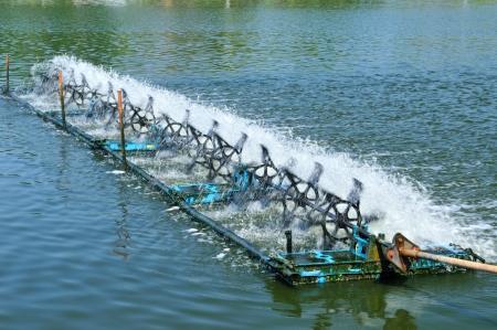 clarifier:  Shrimp clarifier in trat province , Thailand