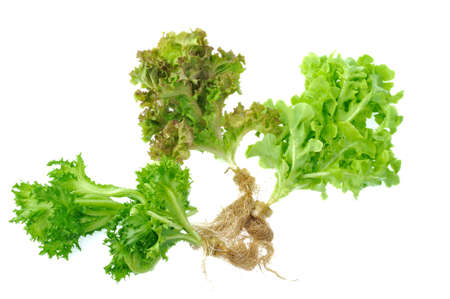Fresh lettuce isolated on white background photo