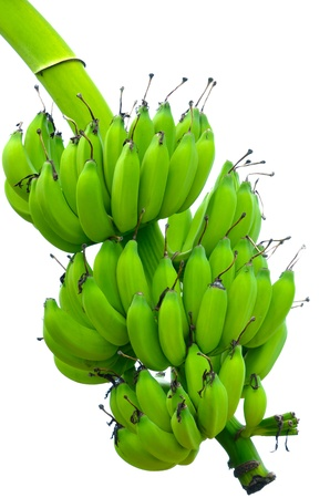 Banana bunch on tree isolated on white background photo