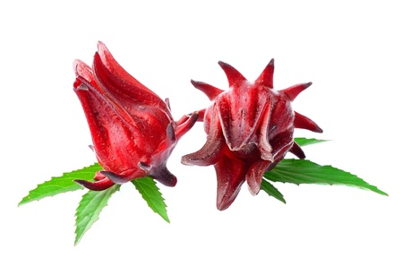 Hibiscus sabdariffa ou oseille fruits isol�s sur fond blanc photo