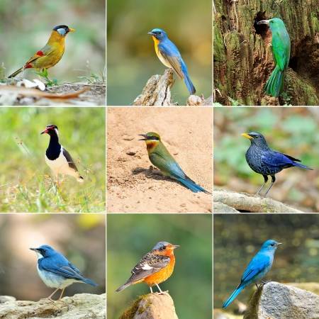 collection of birds photo