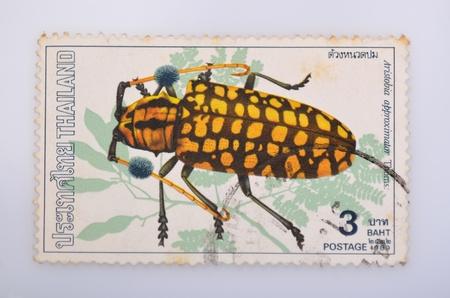 THAILAND - CIRCA 1989  A stamp printed in Thailand shows beetles , circa 1989 photo
