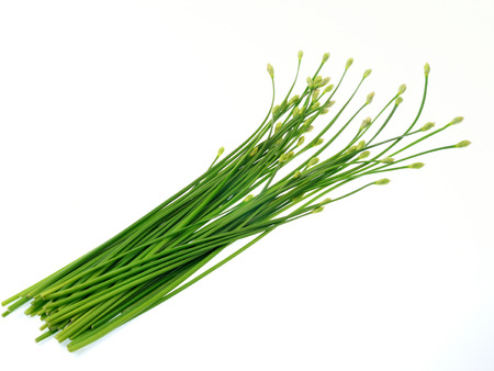 odorum: Garlic chives or Ku Chai isolated on white background