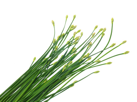 ramosum: Garlic chives or Ku Chai isolated on white background
