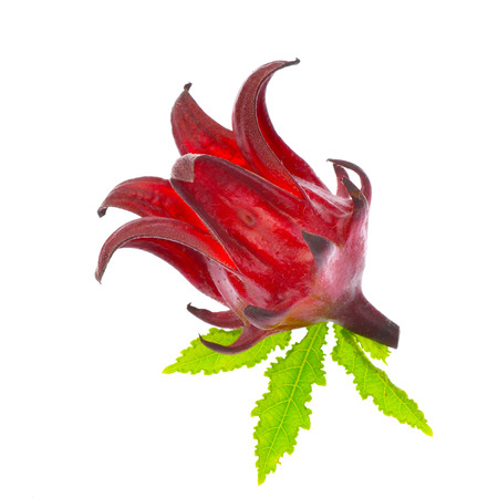 Hibiscus sabdariffa or roselle fruits isolated