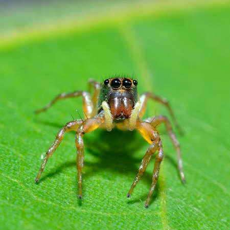 Close up of a spider in nature photo
