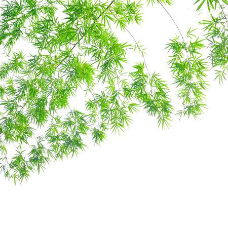 Bamboo leaves isolated on white background photo