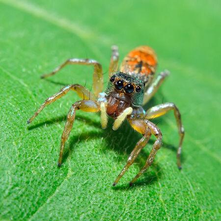 spider in nature photo