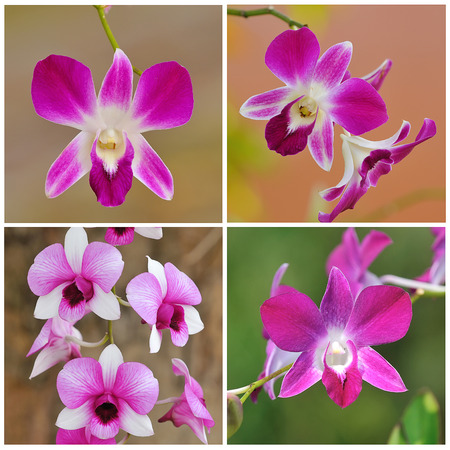 collection of purple orchid photo