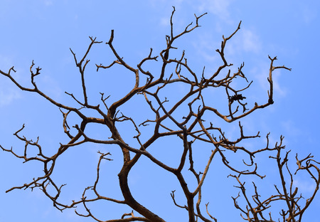 Bare branches of a tree photo