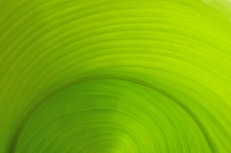 Texture of a green leaf as background 版權商用圖片