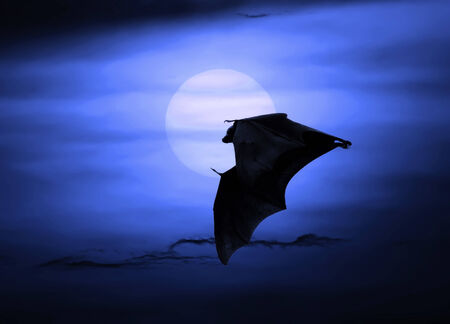 nocturnal: Bats flying at night