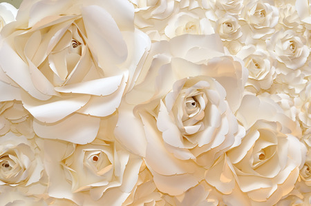 rose petals: Beautiful white rose background