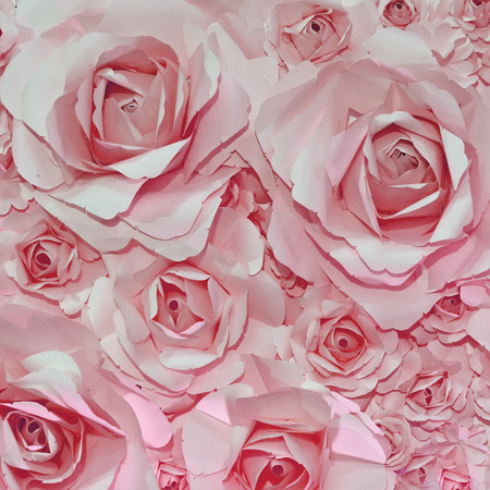 Beautiful pink rose background