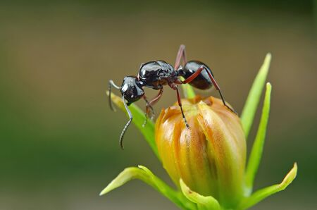 close up ant in nature