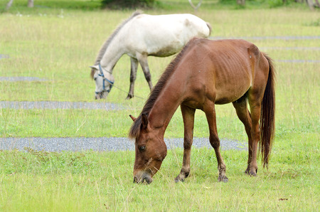 mare: Mare and foal. Horses grazing in field Stock Photo