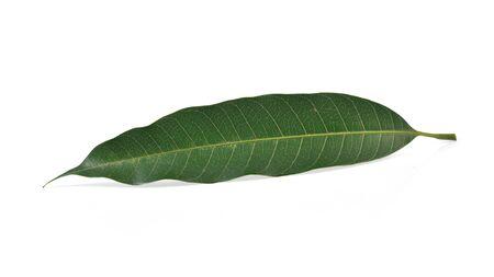 xwhite: Part of Palm tree (palm, coconut, leaf)