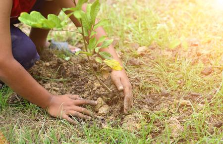 장갑 손 정원에서 뿌리와 작은 나무 심기