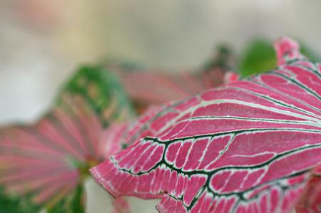 Leaf of a plant close up