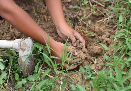 Hand with glove Planting Small Tree with roots in a garden on green Stock Photo