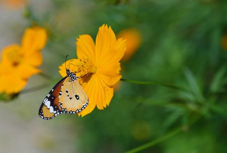 Butterfly and flower in flower garden