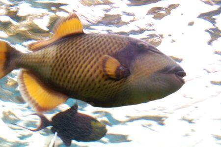gills: fish