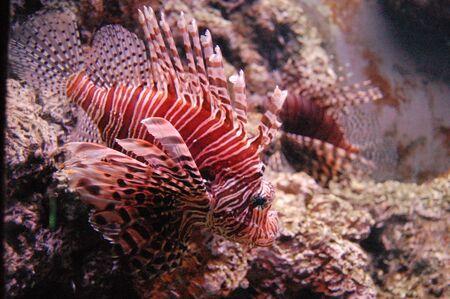gills: tropical fish