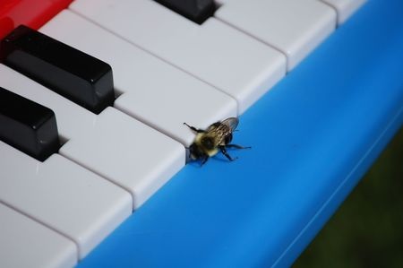 bee playing piano Stock Photo
