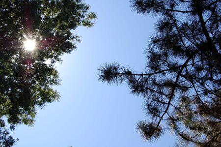 Zondag schijnt door de bomen met blauwe hemel Stockfoto - 2912307