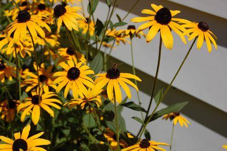 Bee pollinating flowers Фото со стока